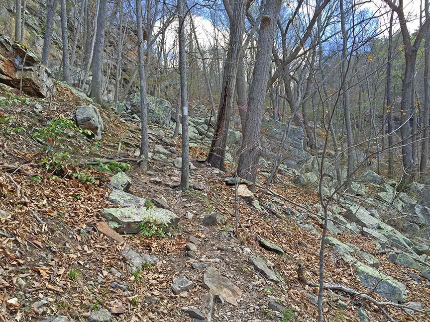 Chambers Ridge Falls - Trail