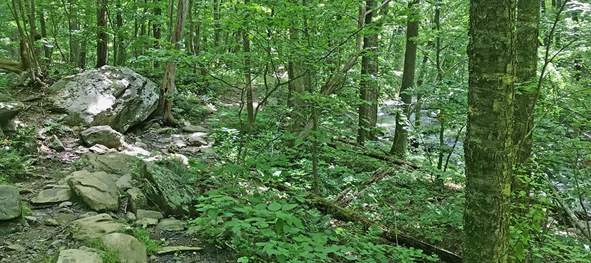 South River Falls - Rough Trail