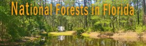 National Forests in Florida