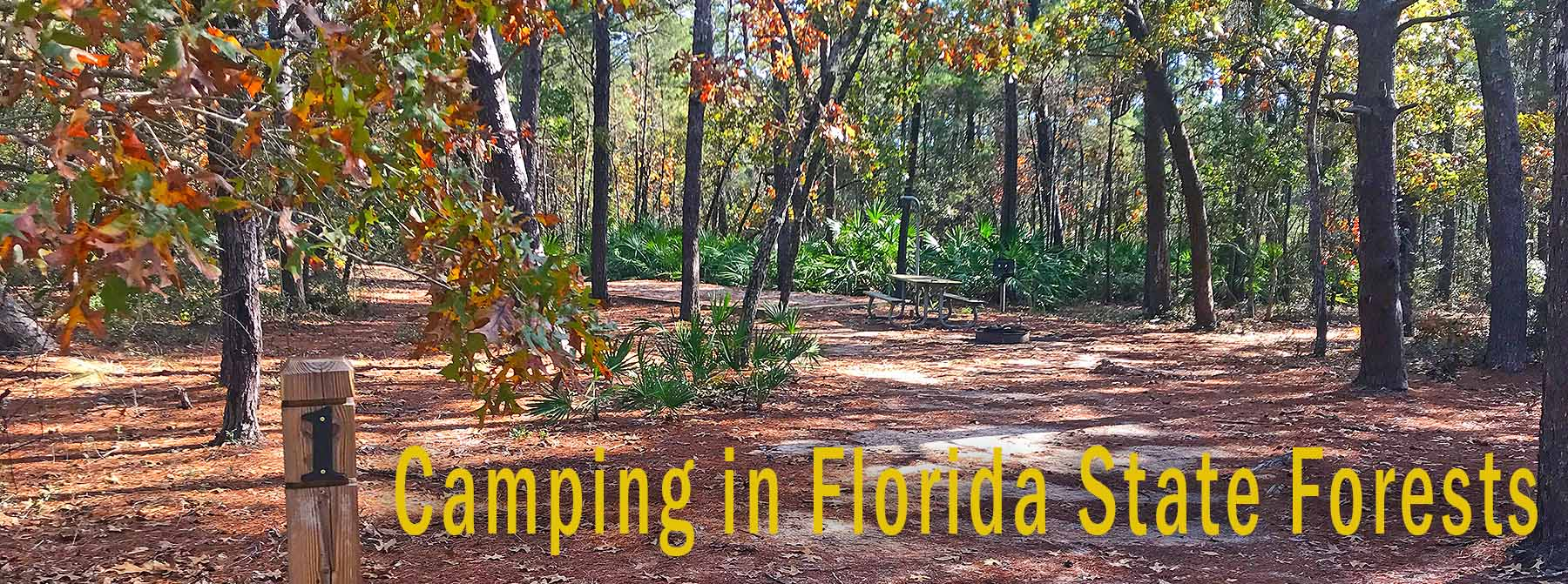 Florida State Forest Camping